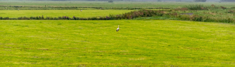 In den Weiten des Teufelsmoors bei Worpswede sammeln sich die Vögel.